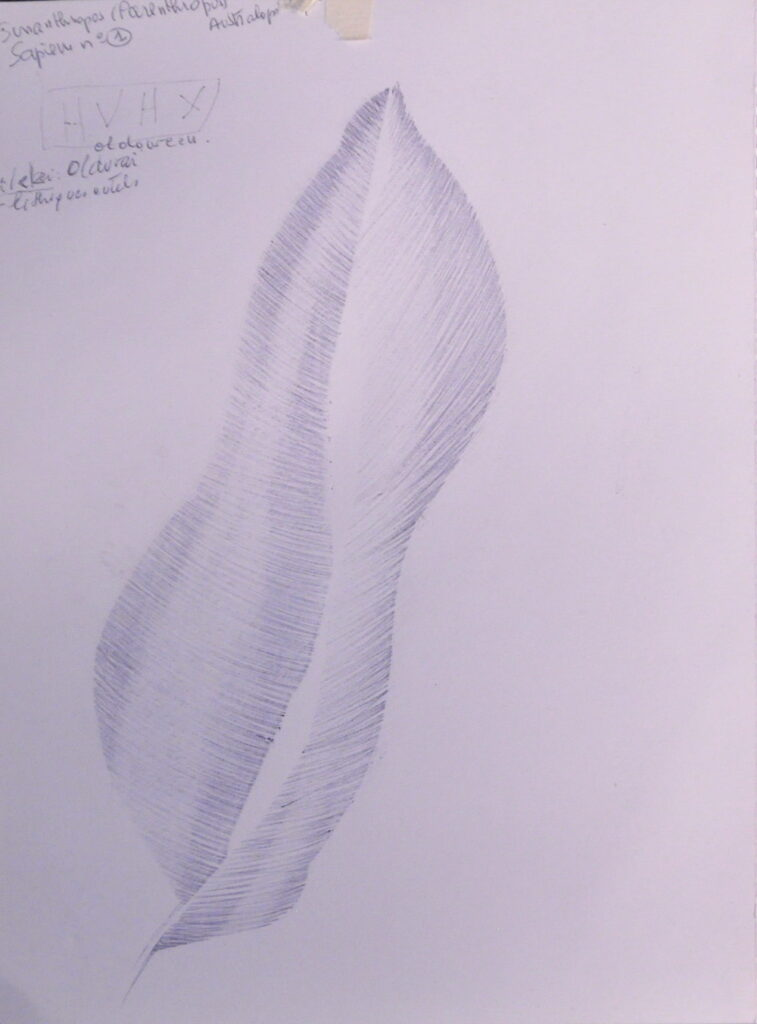 dessin sans dessein 150